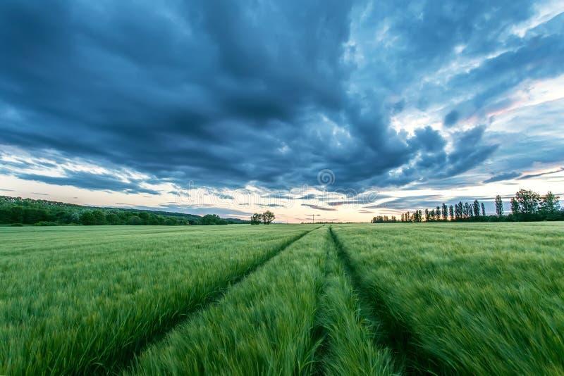 Reifendes Weizenfeld und Sonnenaufganghimmel lizenzfreie stockfotos