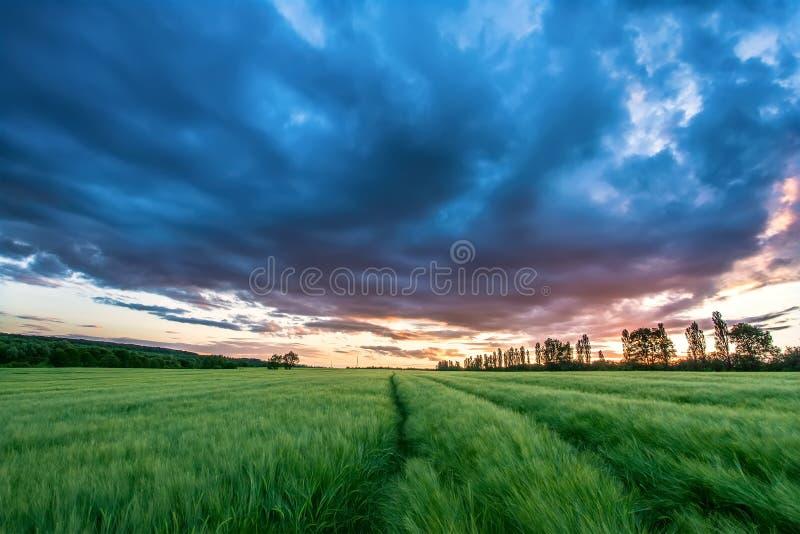 Reifendes Weizenfeld und Sonnenaufganghimmel lizenzfreies stockbild