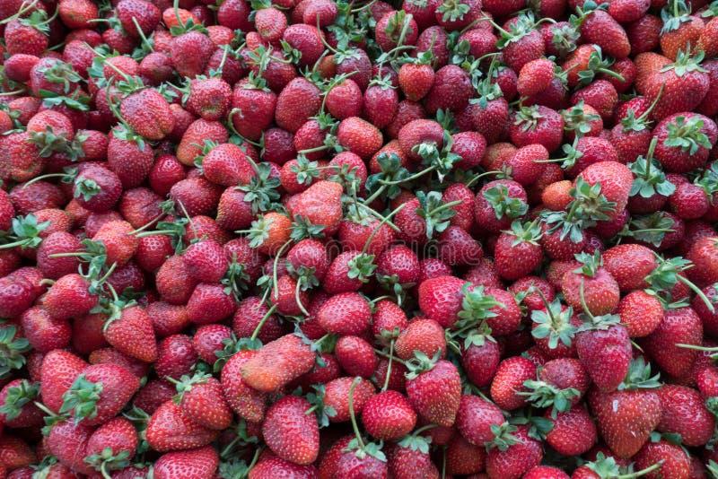 Reifer frischer Erdbeerhaufen auf Markt-Stall lizenzfreies stockfoto