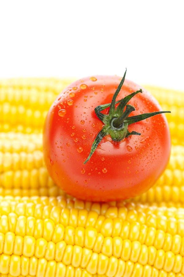 Reifer gelber Mais und Tomate lizenzfreies stockfoto