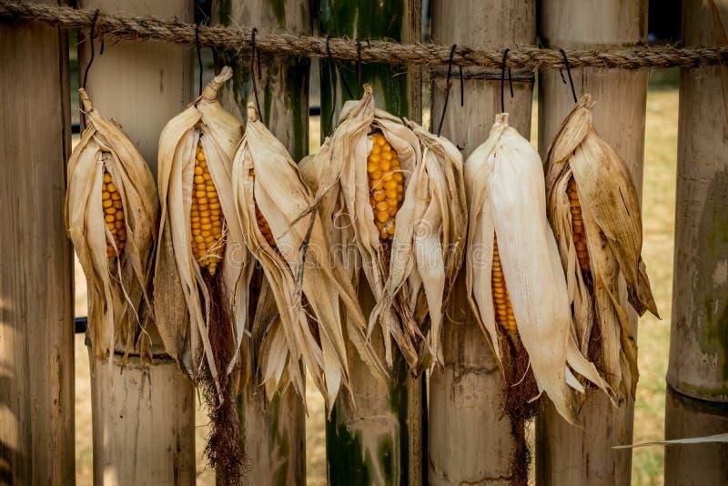 Reifer getrockneter Mais lizenzfreie stockfotografie