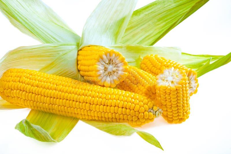 Reifer goldener Mais lokalisiert auf weißem Hintergrund lizenzfreie stockbilder