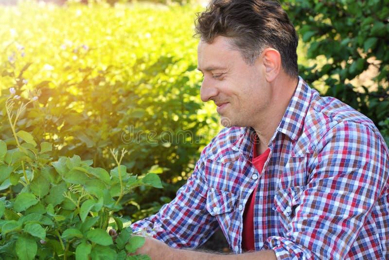 Reifer Landwirt, der auf dem Gebiet mit Grünpflanzen sitzt lizenzfreie stockbilder