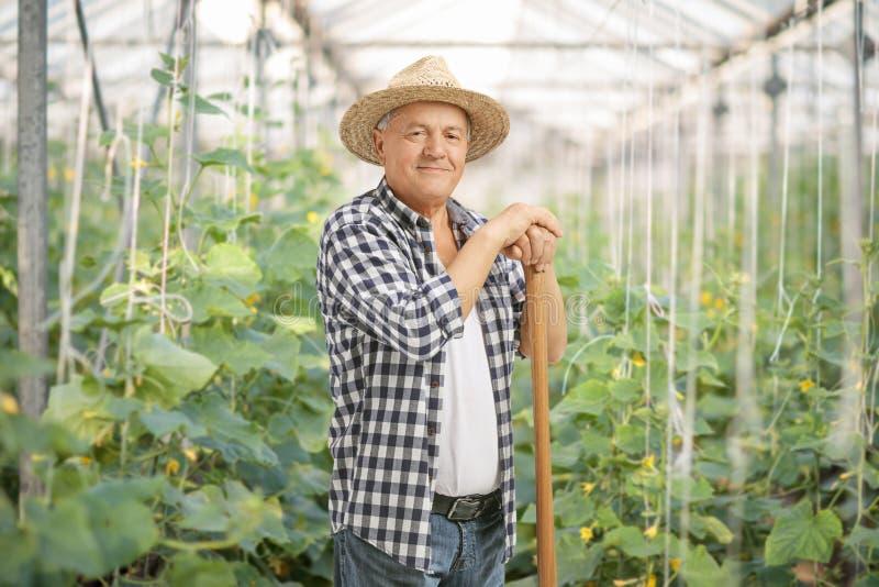 Reifer Landwirt, der in einem Gewächshaus aufwirft lizenzfreie stockfotografie