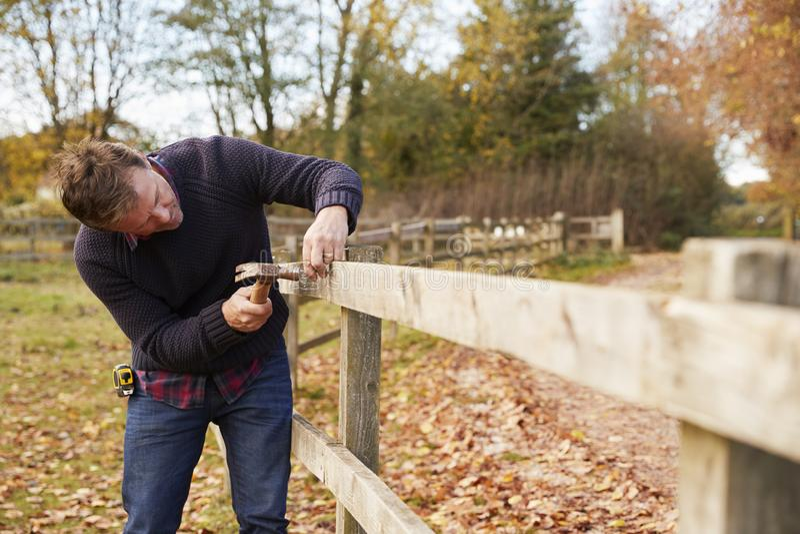 Reifer Mann, der Nagel in reparierten Zaun hämmert stockbild