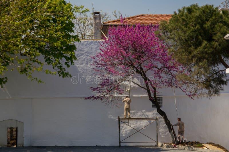 Reifer Mannmalereizaun draußen stockfoto