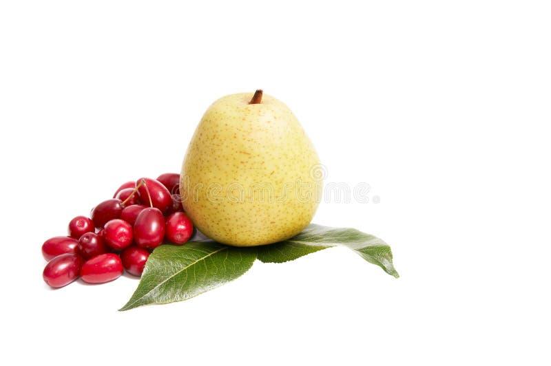 Reifer, neuer Herbst trägt auf einem Weiß Früchte. stockfotografie