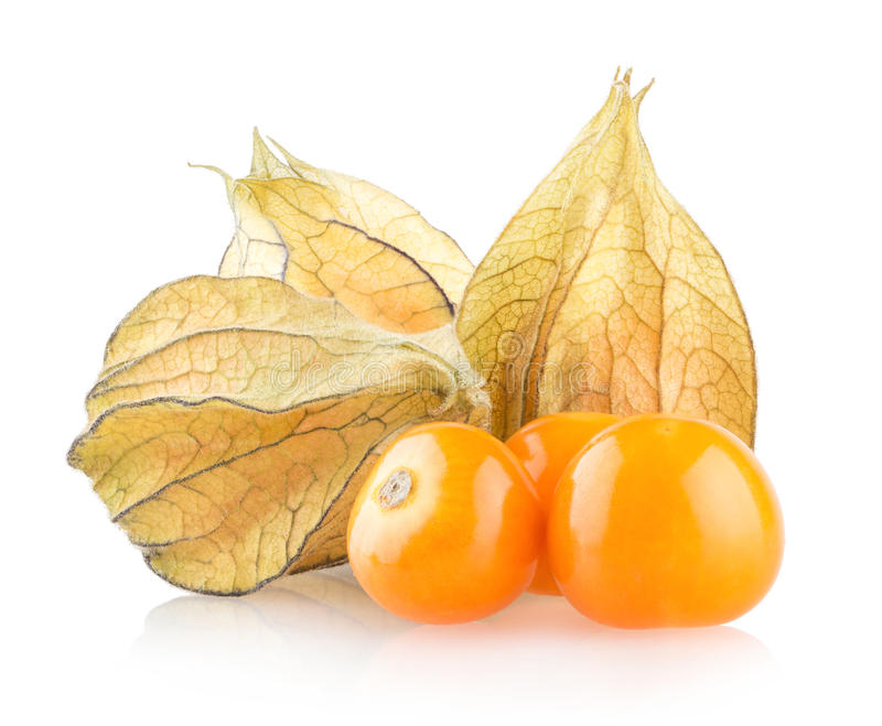 Reifer Physalis lizenzfreie stockfotos