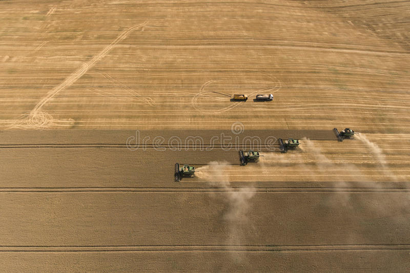 Reifer Weizen der Erntemaschinenernte stockfotos