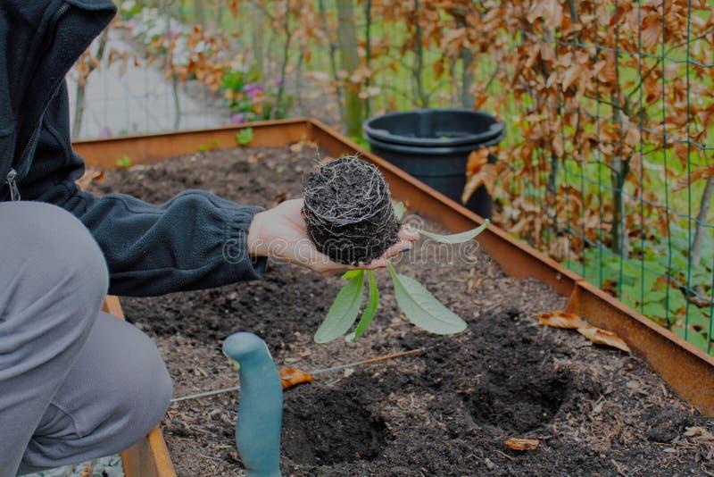 Reifes Mädchen, das in ihrem Hinterhof im Garten arbeitet stockfotografie
