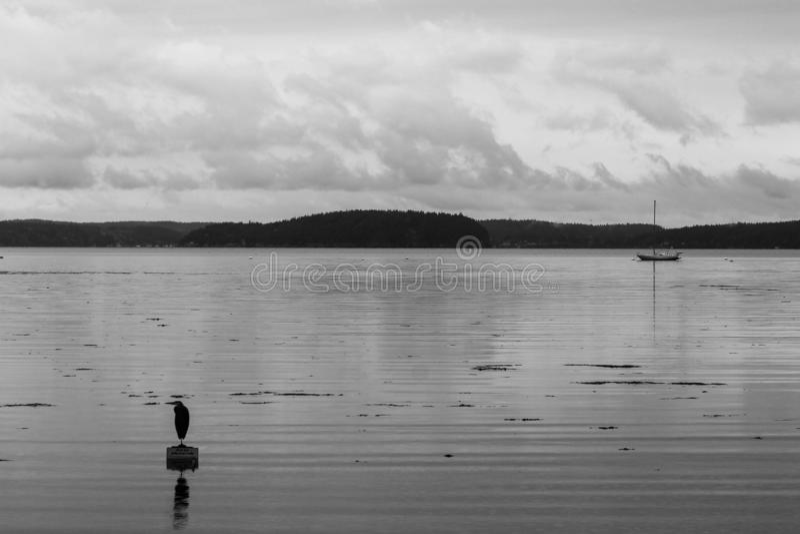 Reiger in grijze tinten die zich op drijvend teken met bezinning, zeilboot in afstand en eilandlandschap bevinden op achtergrond royalty-vrije stock afbeelding