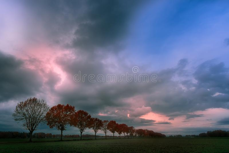 Reihe der Bäume lizenzfreie stockbilder