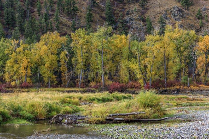 Reihe der gelben Bäume stockbild