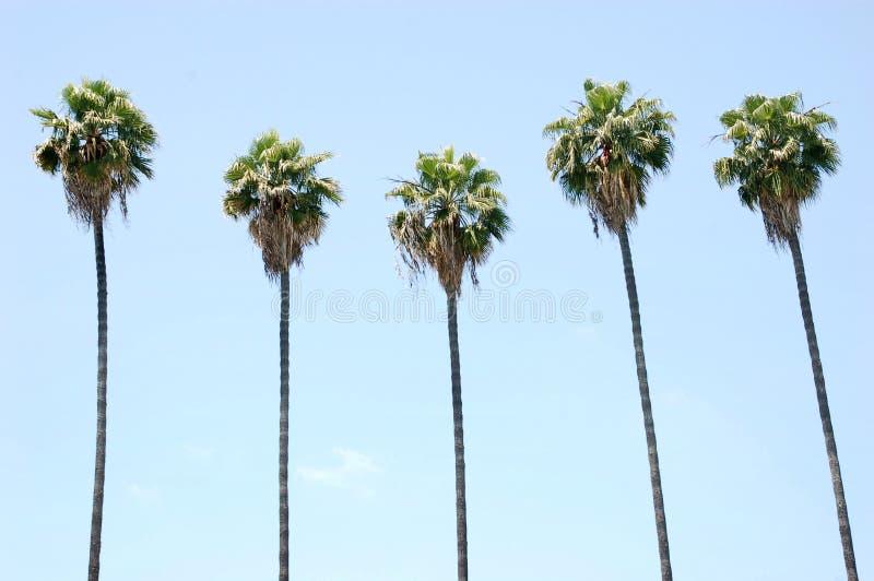Reihe der Palmen lizenzfreie stockfotografie