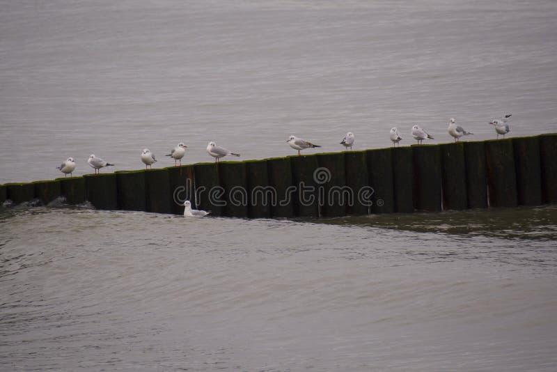 Reihe der Vögel, sitzend auf der Klotzgrenze stockbild