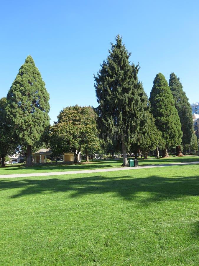 Reihe des alten immergrünen Baums lizenzfreies stockfoto