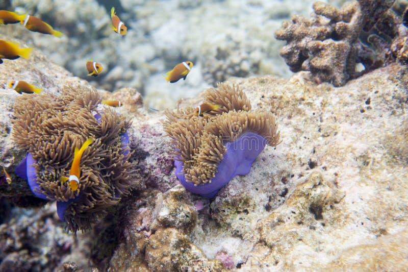 Reihe Fische stockfoto