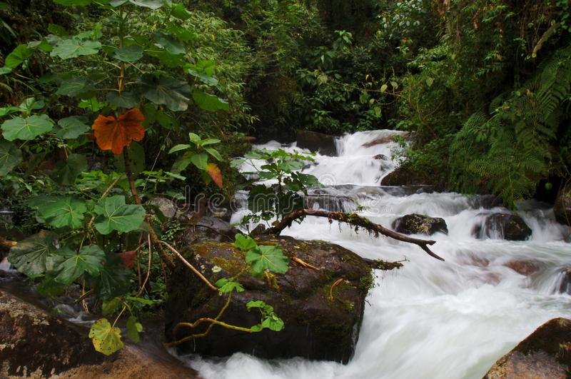 Reihe kleine Kaskaden in einem tropischen Regenwald stockfotografie