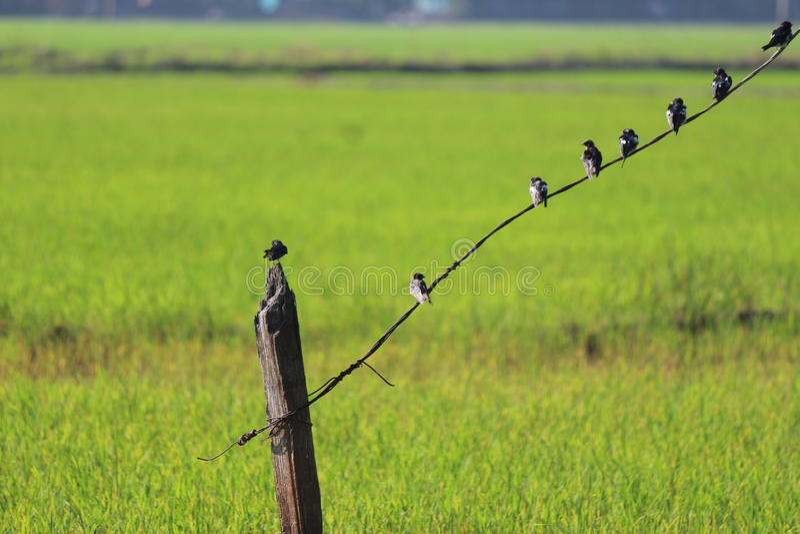 Reihe Vögel stockbild