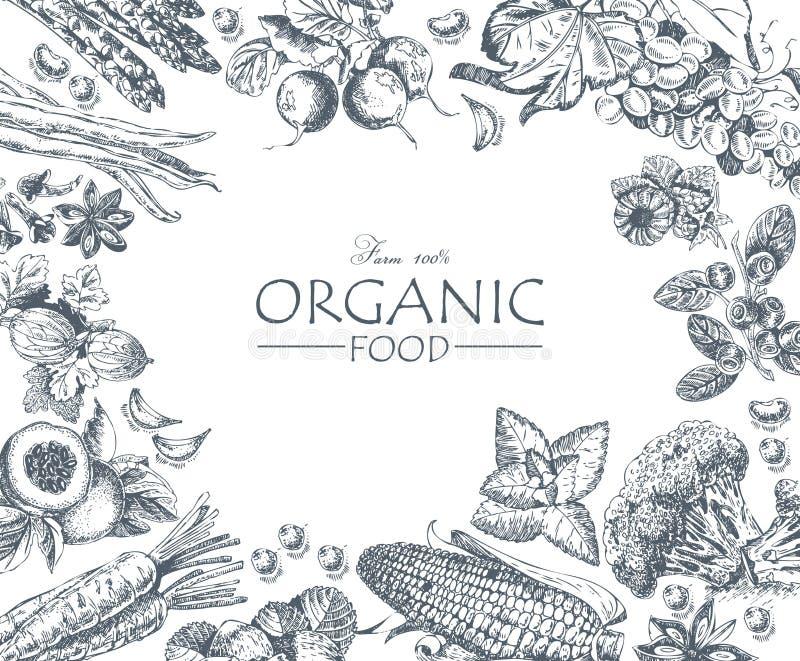 Reihe - Vektorfrucht, -gemüse und -gewürze Bauernhofmarkt Frische Frucht auf einem weißen Hintergrund organisch stock abbildung