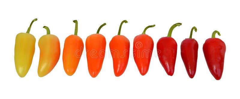 Reihe von frischen Peperoni von Gelbem zu den orange und roten Farben, Draufsicht, lokalisiert stockbilder