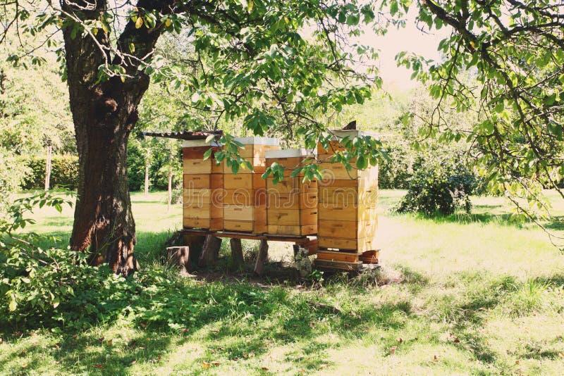 Reihe von gelben Bienenstöcken im Garten stockfotos
