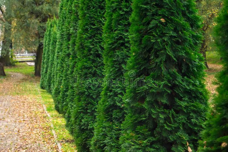 Reihe von grünen Bäumen im Park stockfotografie