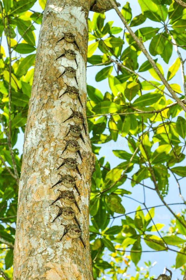 Reihe von Schlägern auf Baumstamm im Regenwald stockbild