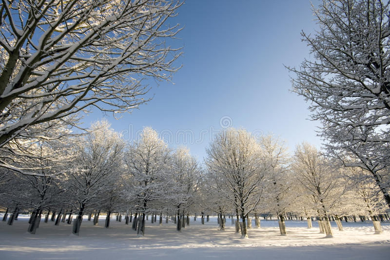 Reihen der Bäume im Winter lizenzfreies stockbild