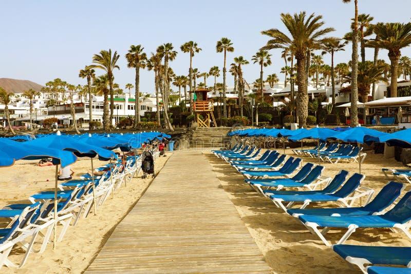Reihen des leeren Strandliege mit Regenschirmen auf dem Sand mit Palmen auf dem frühen Morgen des Hintergrundes stockbilder