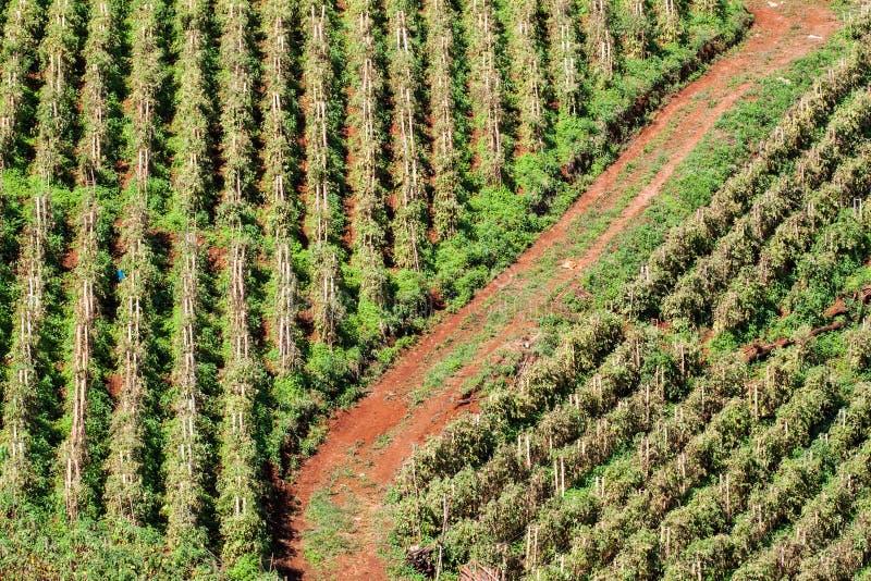 Download Reihen Des Organischen Gemüses Stockbild - Bild von blumen, garten: 27726149