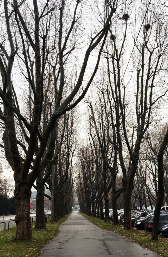 Reihen von Autumn Trees stockbilder