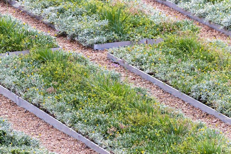 Reihen von Blumenbeeten stockfoto