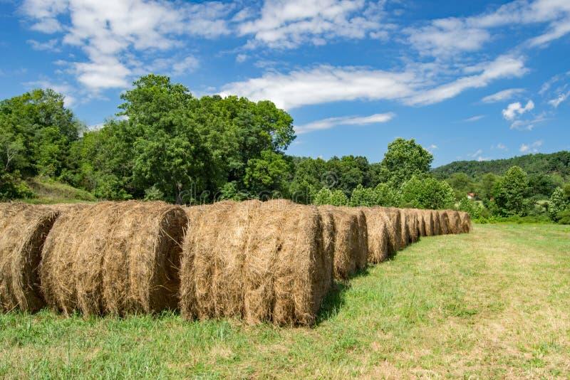 Reihen von Hay Bales stockfoto