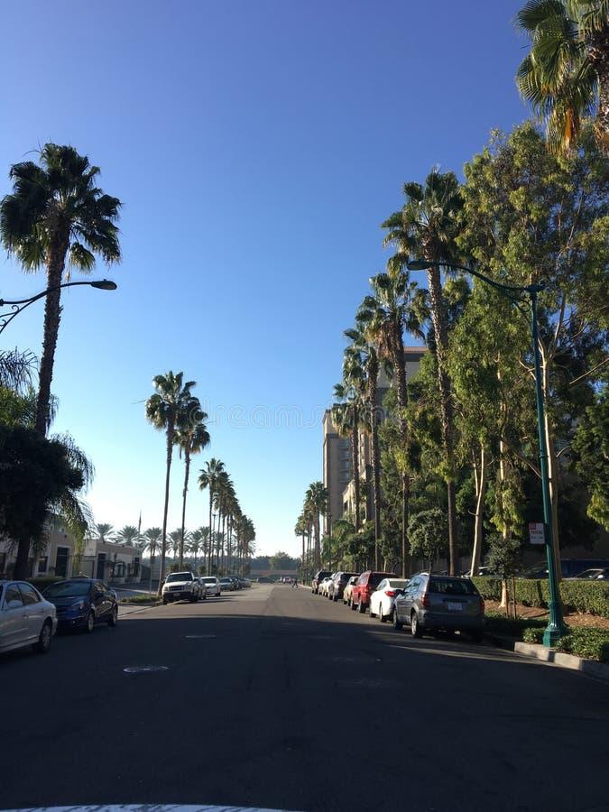 Reihen von Palmen in Las Angeles, Kalifornien lizenzfreie stockbilder