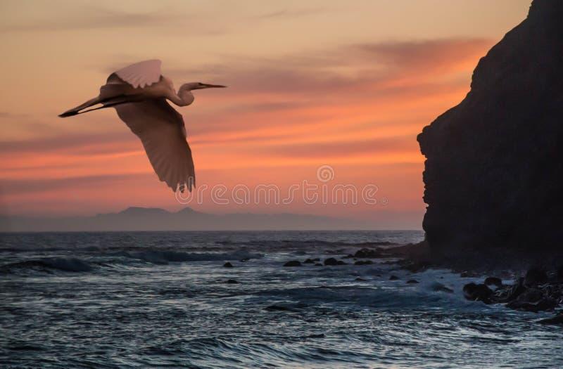 Reiher bei Dana Point, Kalifornien lizenzfreies stockfoto