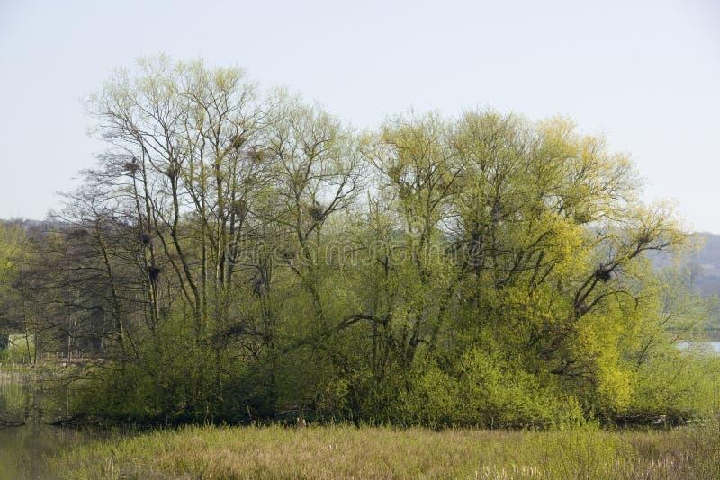 Download Reihernester, See An Yorkshire-Skulpturenpark Stockfoto - Bild von bild, bäume: 106804064
