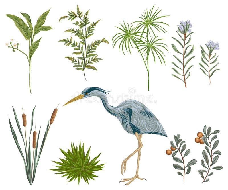 Reihervogel und Sumpfanlagen Sumpfflora und -fauna stock abbildung