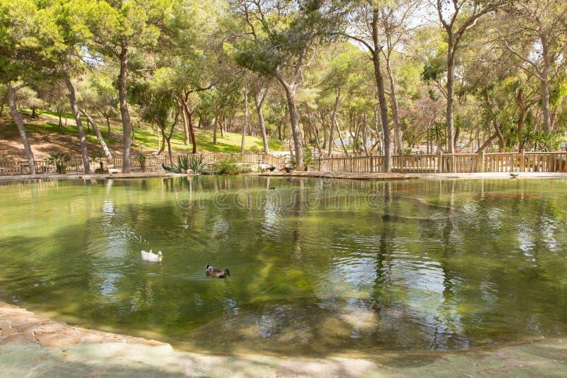 Reina Sofia Park Guardamar del Segura Spain-toeristische attractie met eenden op de vijver royalty-vrije stock foto