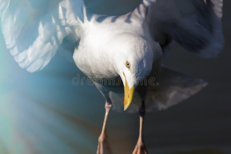 reincarnation Imagem espiritual dos animais selvagens de um pássaro branco no l imagem de stock