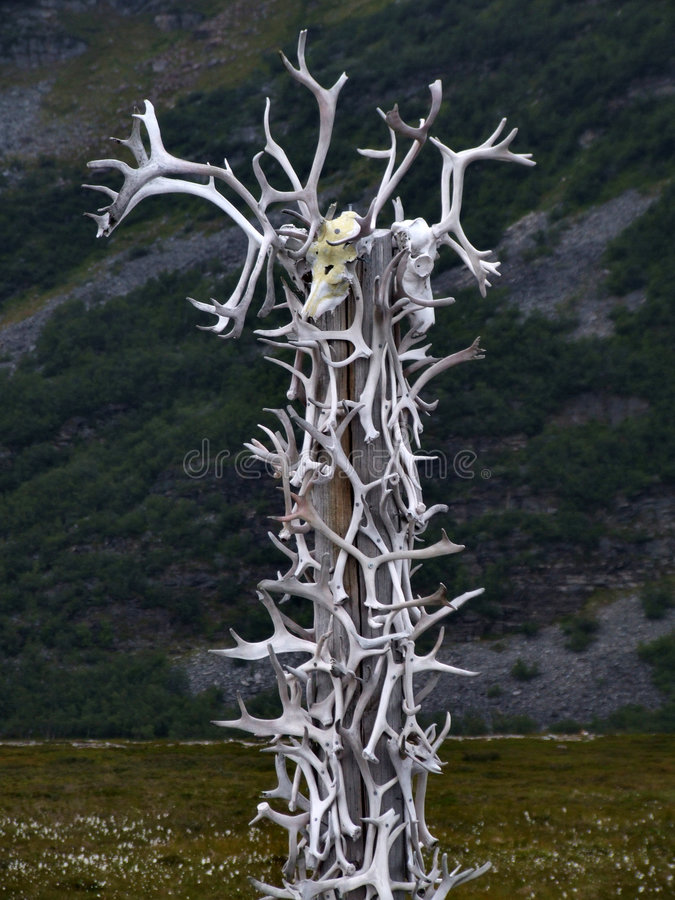Reindeer antlers collection. Collection of reindeer antlers on a wooden pillar stock photography