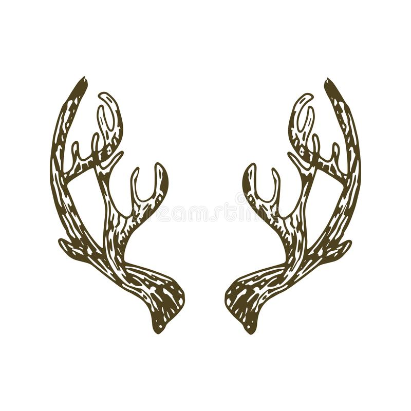 Reindeer antlers illustration. Vector isolated on white bacjground vector illustration