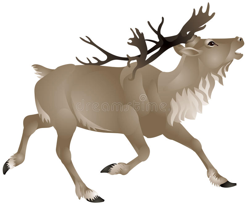 Download Reindeer Or Caribou In North America Stock Vector - Image: 24300770