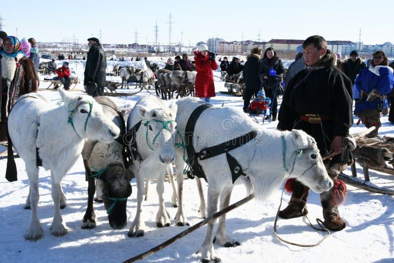 Reindeer herder stock photography