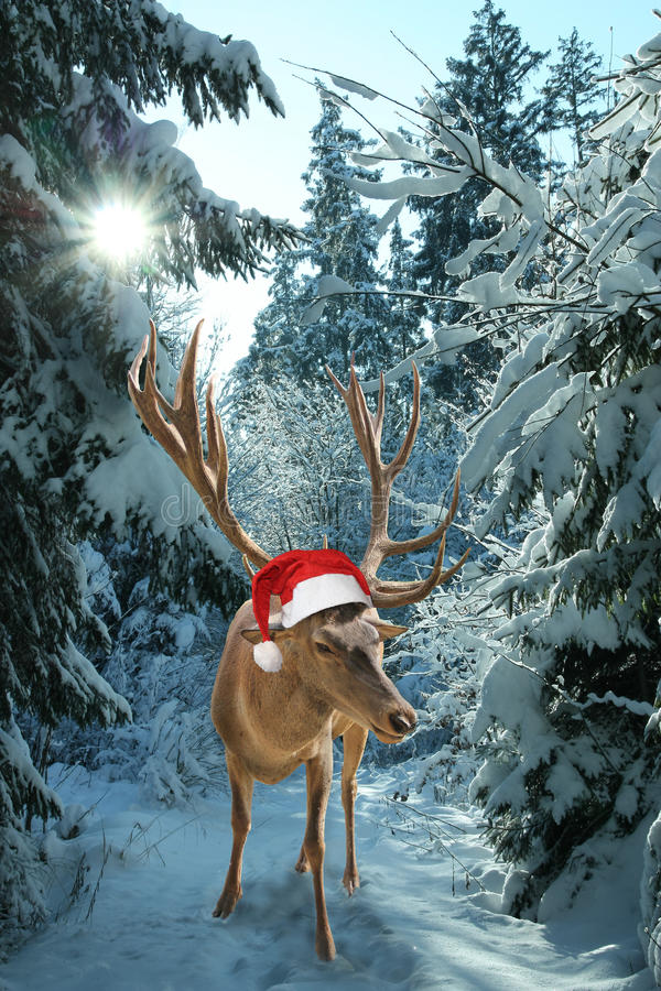 Reindeer Rudolph in the snowy forest. Reindeer with santa claus hat in the wintry forest. christmas design stock images
