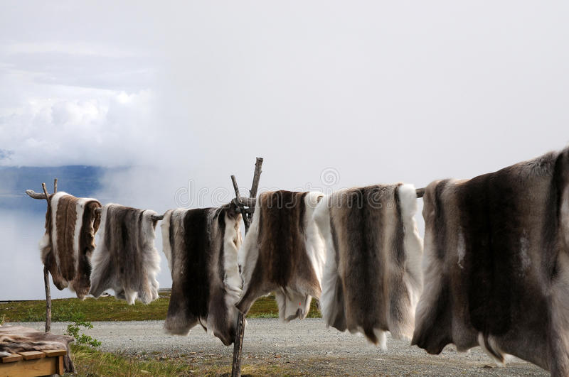 Reindeer skin. Sami, the indigenous people in the arctic area, sell reindeer skins at touristic viewpoints in norway royalty free stock photo