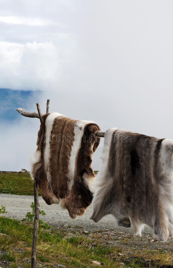 Reindeer skin. Sami, the indigenous people in the arctic area, sell reindeer skins at touristic viewpoints in norway stock photos