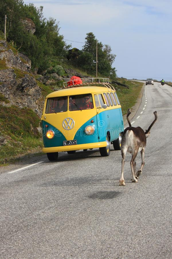 Reindeer van, and other vehicles on the road to North Cape. Reindeer going slowly to Nordkapp, closing the road old van coming fron the other side North Cape royalty free stock photography