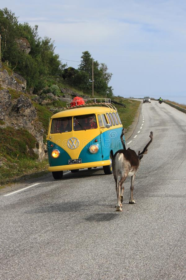 Reindeer van, and other vehicles who is the master of the road. Reindeer going slowly to Nordkapp, closing the road old van coming fron the other side North Cape royalty free stock photo