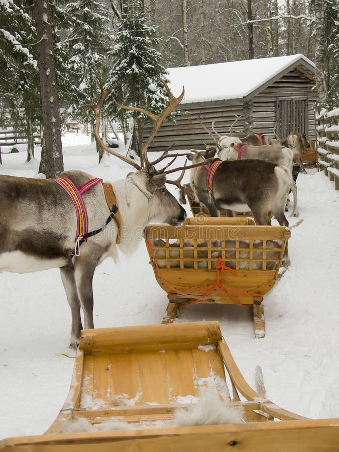 Download Reindeers with sleds stock photo. Image of winter, sled - 4639936